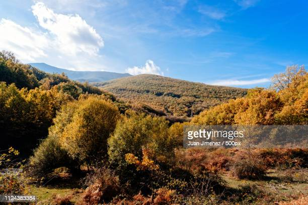 beech forest in autumn time a sunny day - segovia stock pictures, royalty-free photos & images