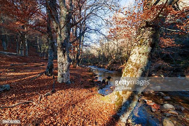 Beech forest of Montejo, Madrid, Spain