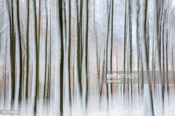Beech trees covered in snow - Abstract look