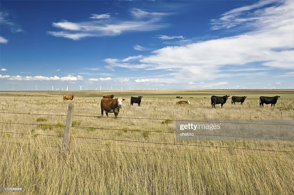 Beef and Electricity Seven : Stock Photo