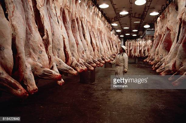 A beef factory worker inspects a row of cow carcasses that hang from the ceiling