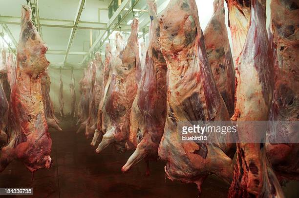 beef - freezer stock photos and pictures