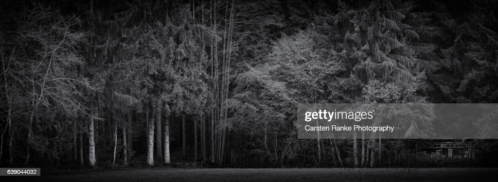 Beehive Hut, Black Forest : Stock-Foto