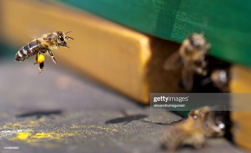 Beehive : Stock Photo