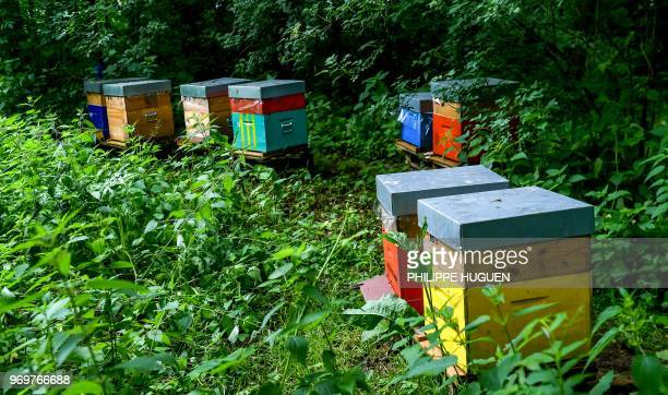 Beehives are pictured on June 8 2018 near Godewaersvelde