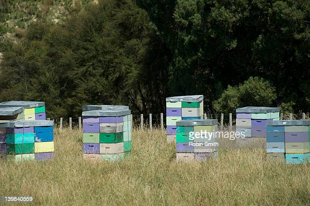 beehives in manuka tree area, north island, new zealand - beehive new zealand stock pictures, royalty-free photos & images
