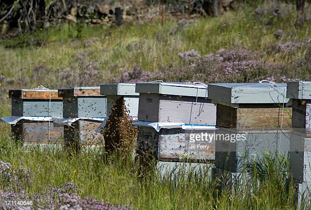 beehives - beehive new zealand stock pictures, royalty-free photos & images
