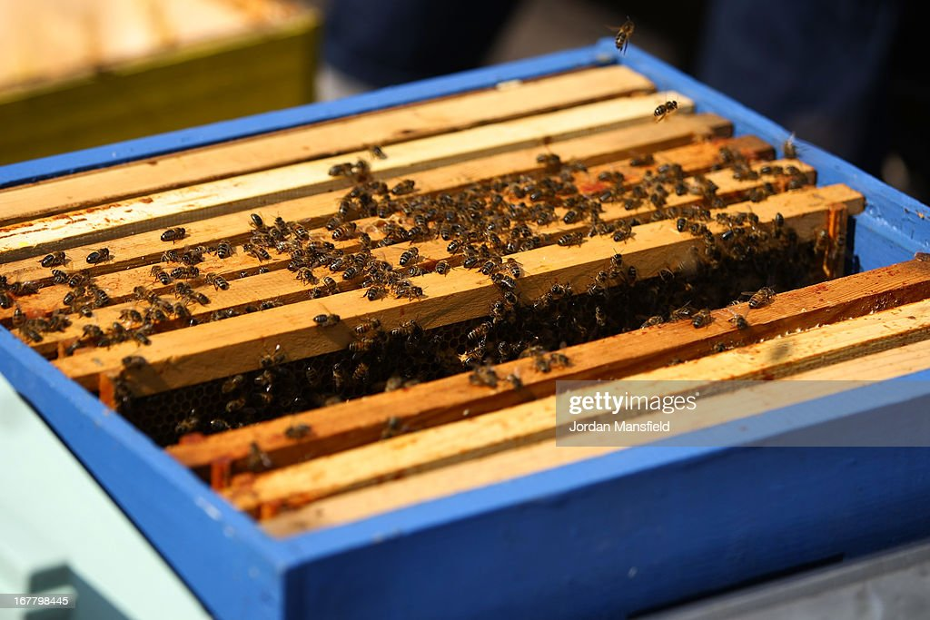 Beehives sit in their containers on the rooftop of Fortnum and Mason on April 30, 2013 in London, England. Fortnum and Mason have kept bees on their rooftop terrace for the last 7 years. At this time of year, the London Honey Company return the bees to their renovated hives.