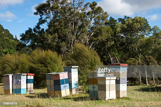 beehives, wairarapa, north island, new zealand - beehive new zealand stock pictures, royalty-free photos & images