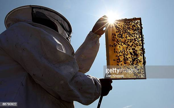 Beekeeper and Chairman of The London Beekeepers Association John Chapple installs a new bee hive on an urban rooftop garden in Islington on July 1...