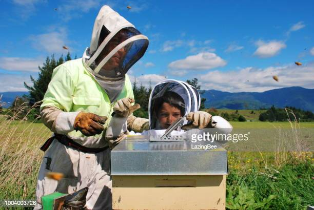 beekeeper and son with beehives - beehive new zealand stock pictures, royalty-free photos & images