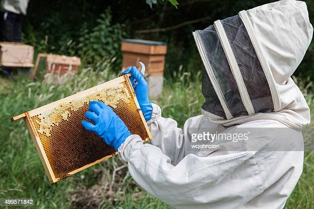 beekeeper assessing one of the bee frames from the beehive