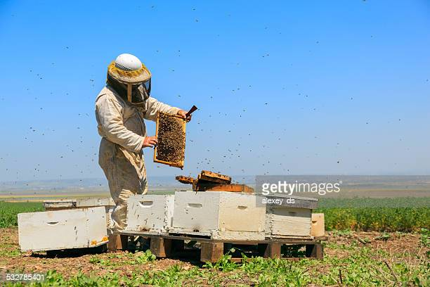 養蜂家の作業 - 養蜂家 ストックフォトと画像