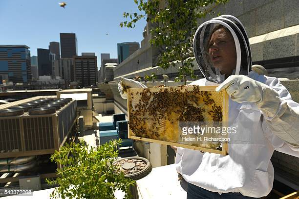 Beekeeper Caitlin Rose Keeney tends to four hives of bees on the roof of Union Station on June 27 2016 in Denver Colorado The hives which were...