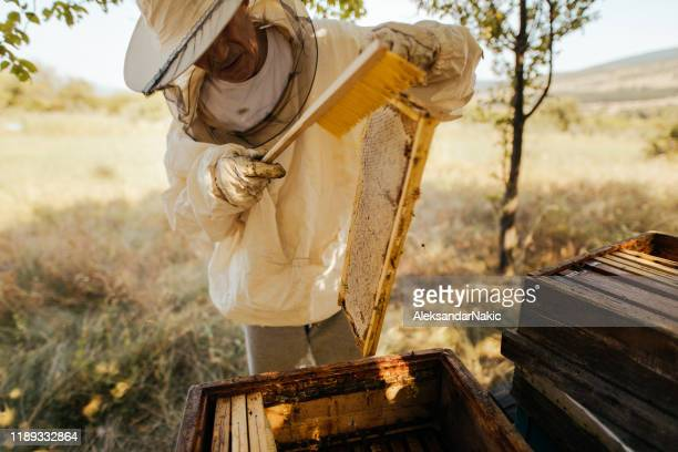 beekeeper checking his beehives - honey bee stock pictures, royalty-free photos & images