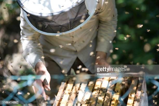 beekeeper checking honeycomb with honeybees - 養蜂 ストックフォトと画像