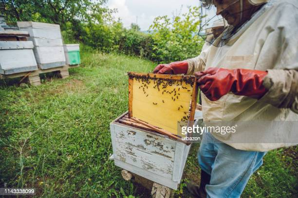 beekeeper collecting honey - honey bee stock pictures, royalty-free photos & images