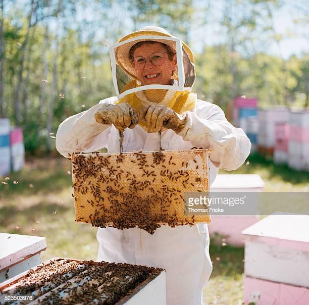beekeeper displaying her bees - 養蜂家 ストックフォトと画像