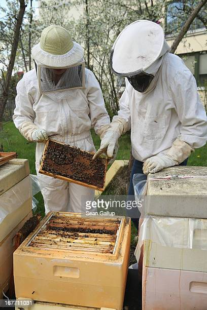 Beekeeper Eva Fisher and friend Chloe Hervell a highschool exchange student from Utah do a weekly checkup on Eva's four bee colonies next to an...