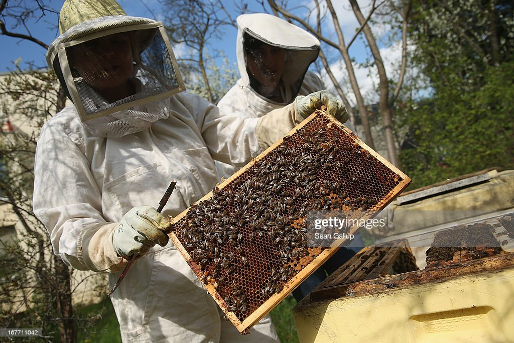 Beekeepers Report Higher Loss Rates In Bee Populations : News Photo
