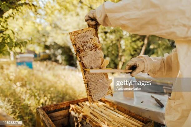ハニカムを持つ養蜂家 - 養蜂 ストックフォトと画像