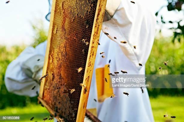 Beekeeper Holding Honeycomb, Croatia, Europe