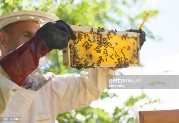 beekeeper in protective clothes inspecting frame with honeycomb from bees - honey bee stock pictures, royalty-free photos & images