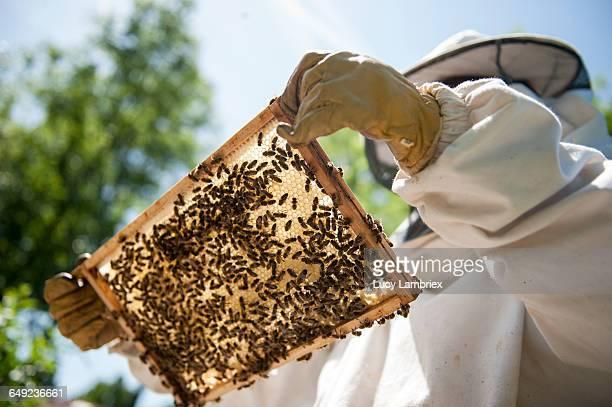 beekeeper inspecting her beehives - 養蜂 ストックフォトと画像