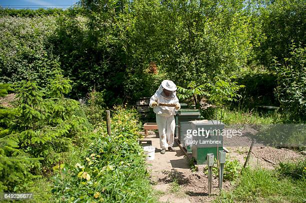 Beekeeper inspecting her bees