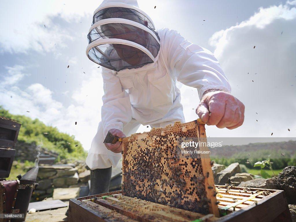 Beekeeper inspects bee hive : Foto de stock