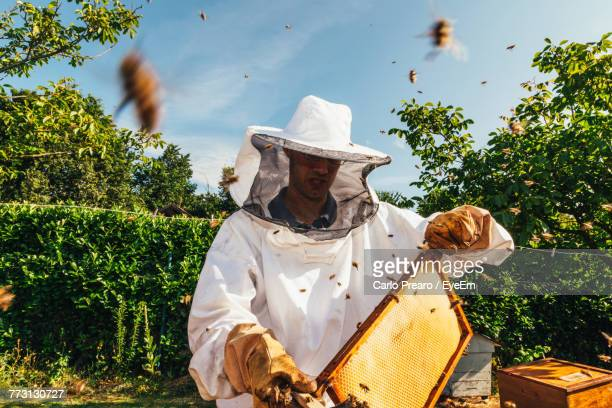 Beekeeper Inspects Beehive