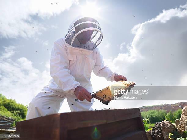 Beekeeper inspects honey comb