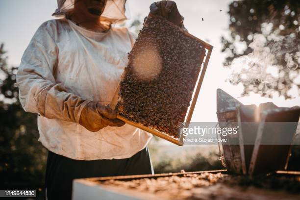 beekeeper lifting a tray out of a beehive - goalkeeper stock pictures, royalty-free photos & images