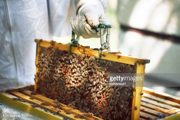 養蜂家のハイブからハニカムを持ち上げる - 養蜂 ストックフォトと画像