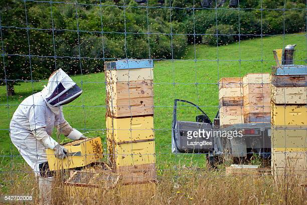 Beekeeper loading Full Beehives onto Truck