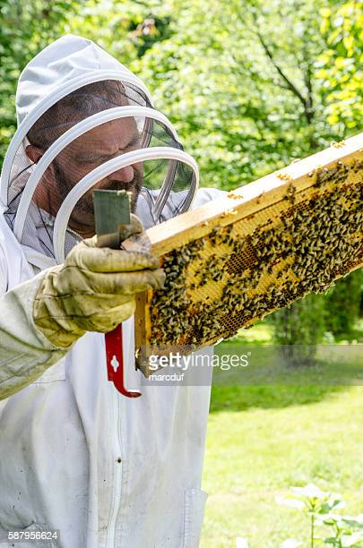 Beekeeper looking at frame from beehive full of bees