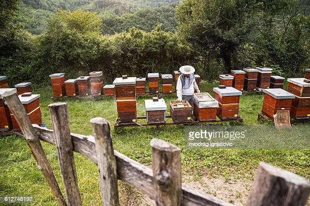 Beekeeper on a field