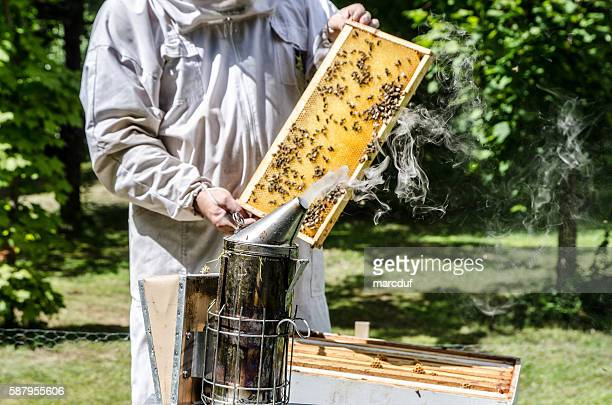 Beekeeper showing frame from beehive full of bees