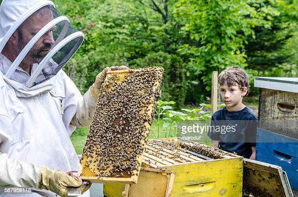Beekeeper showing to little boy frame full of bees