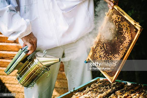 A beekeeper smokes a frame from his beehive
