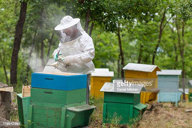 Beekeeper using a smoker.