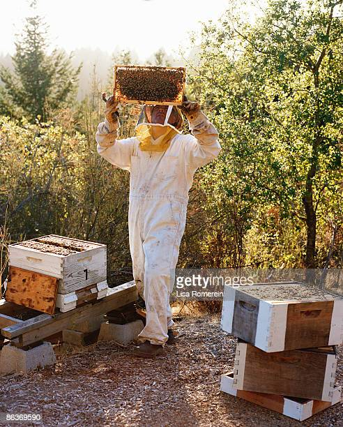 Beekeeper viewing a moveable bee hive frame w/bees