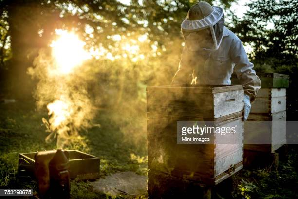 Beekeeper wearing a veil holding a beehive with a smoker for calming bees on the ground.