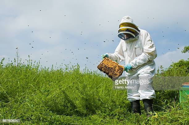 Beekeeper wearing protective clothing checking bee hive
