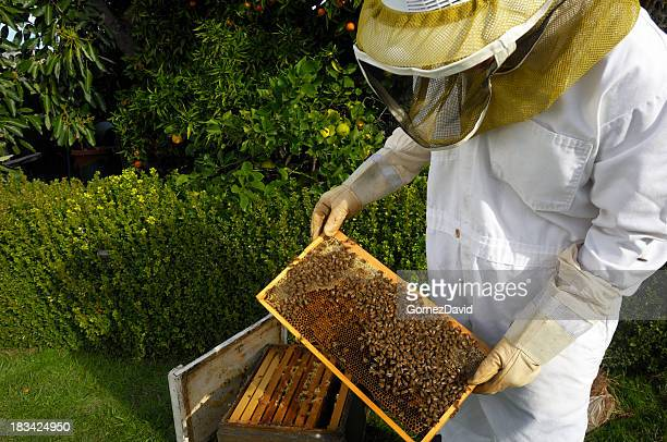 Beekeeper Working with Beehive