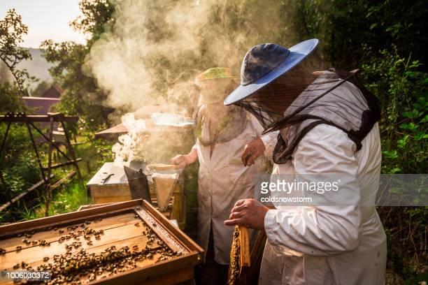 屋外の蜂蜜の収集作業での養蜂家 - 養蜂 ストックフォトと画像