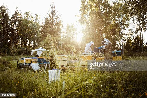 beekeepers examining beehives on grassy field - 養蜂 ストックフォトと画像