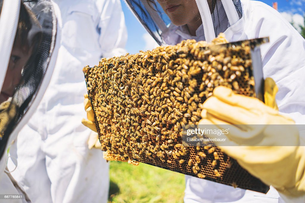 Beekeepers Holding Brood Frames With Bees Stock Photo | Getty Images