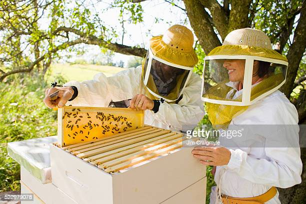 Beekeepers inspecting honey frame