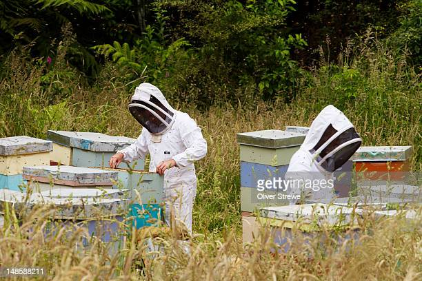 Beekeepers near Jeruselum, on the Whanganui River Road.